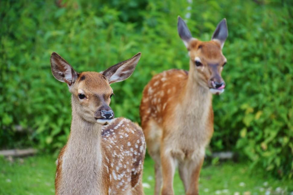 roe-deer-kitz-wild-forest-122431